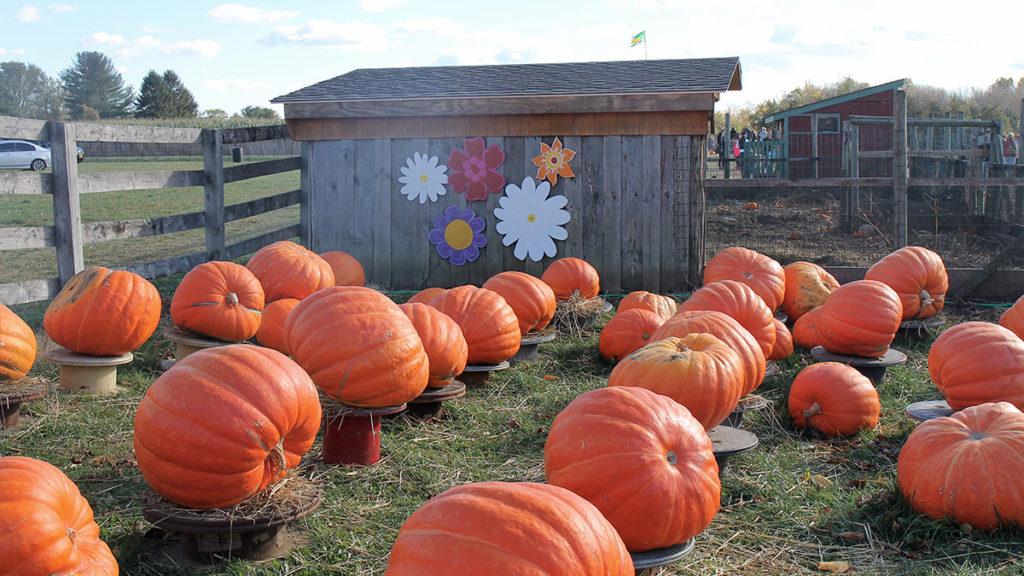 Photo of a pumpkin patch